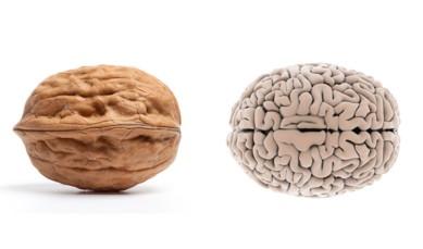 54eacfc2b9463_-_02-walnut-brainfoods-that-look-like-body-parts-1